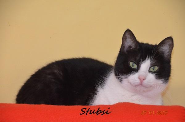 Stubsi