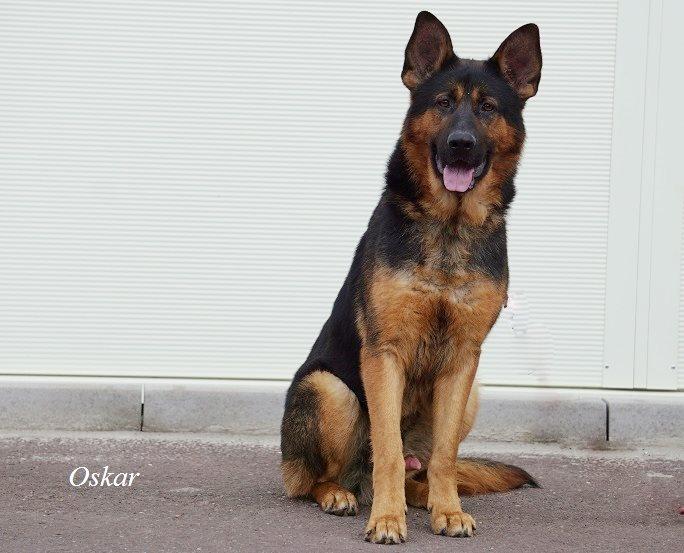 Oskar – vermittelt