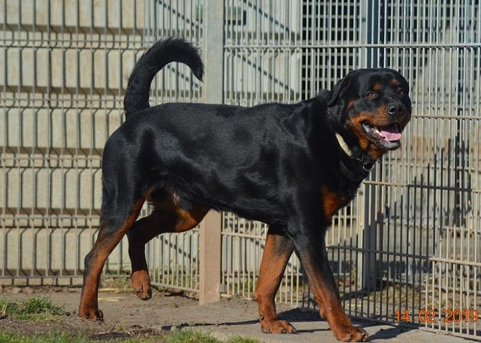 Loki (Vorfallshund)