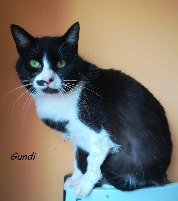 Gundi – vermittelt